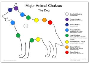 Dog reiki healing treatment