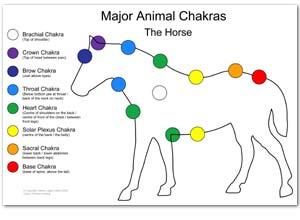Horse reiki healing chakras