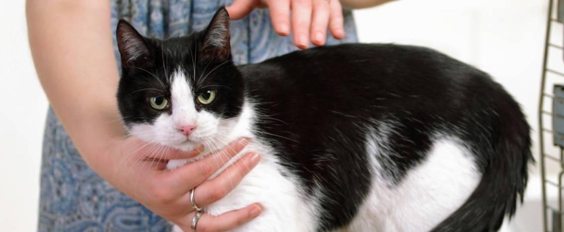 reiki healing cat pet