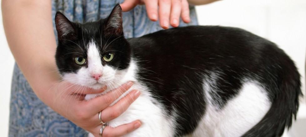 Animal Reiki healing
