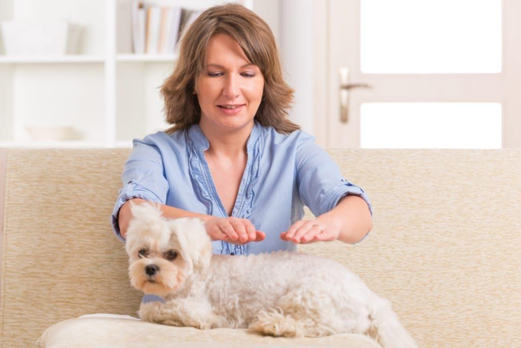 reiki-healing-dog-alternative-treatment